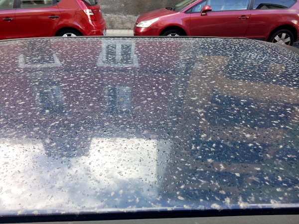 deposición de polvo en coche
