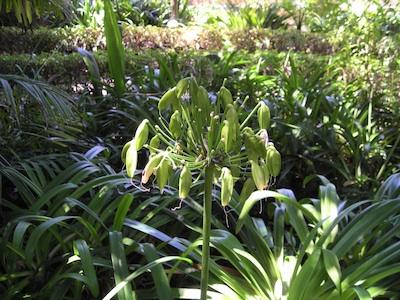 Jardín Botánico Tenerife